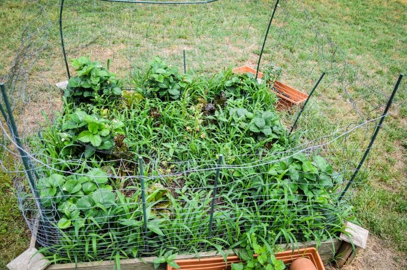 garden 5.23-18