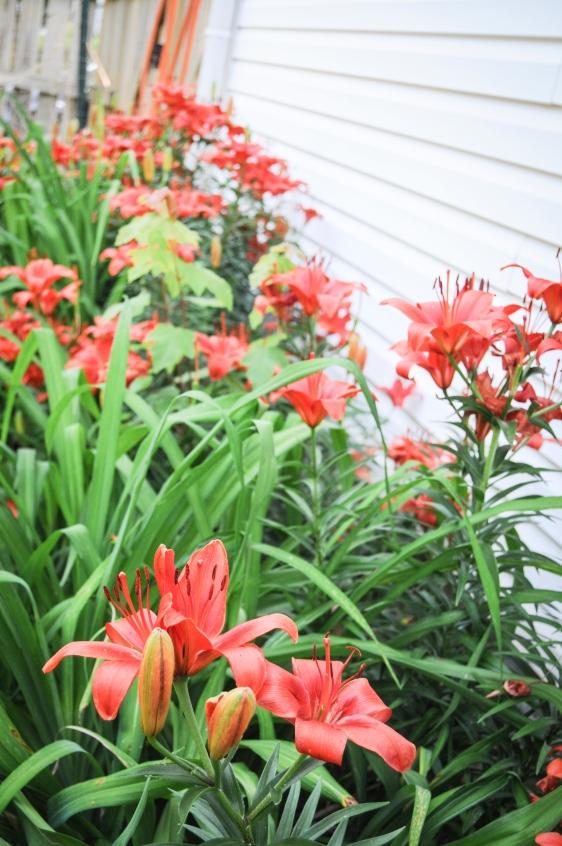 garden 5.23-25
