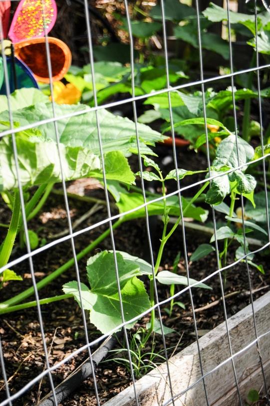 garden 5.23-31