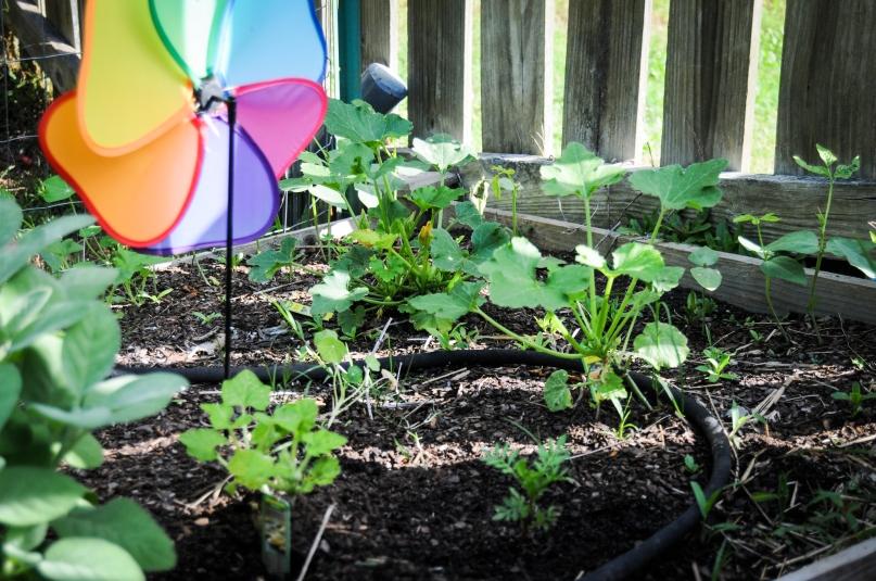 garden 5.23-37