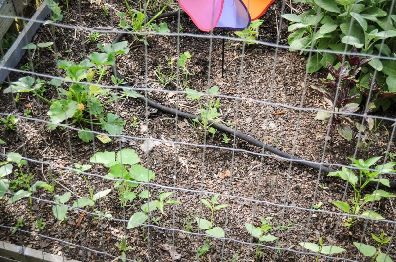 garden 5.23-46