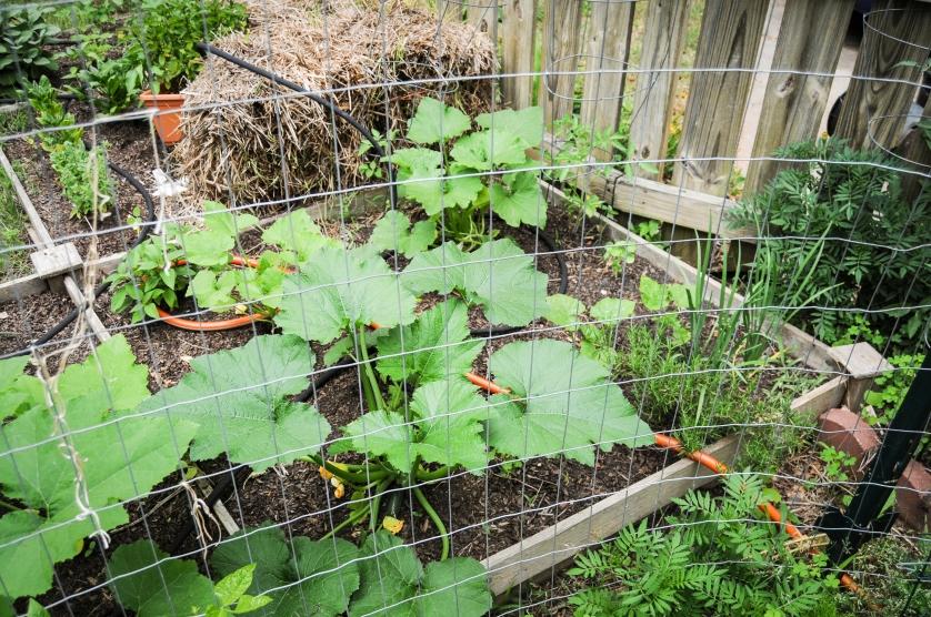 garden 5.23-55