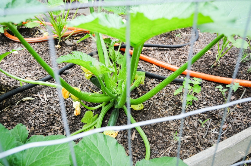 garden 5.23-56