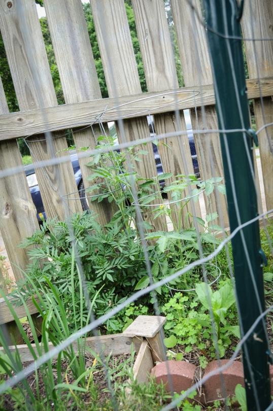 garden 5.23-58